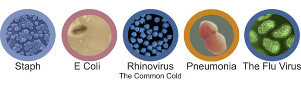 (Examples of some common germs, bacteria and viruses that can be eliminated with Xybix's Antimicrobial features